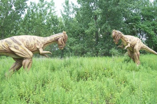 Pachycelpalosaurs Fighting