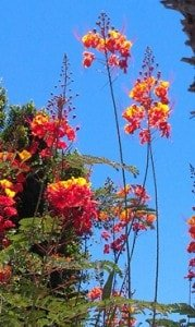 Palm Springs Flowers