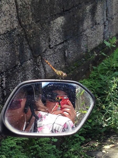 Dragonfly in Bali